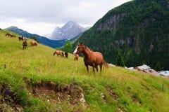 Het weiland van paarden in de bergen Stock Foto's