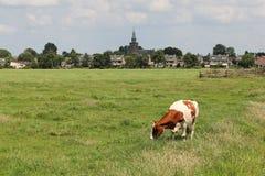 Het Weiland van Streefkerk stock afbeelding
