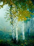 Het wekken van de herfst Stock Fotografie