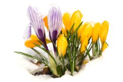 Het wekken van de lente Stock Afbeelding