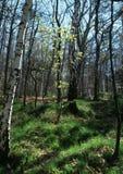 Het wekken van de lente in het bos Stock Foto