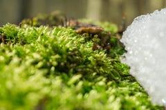 Het wekken van de lente Verse mosbestrijding van sneeuw en ijs Stock Afbeeldingen