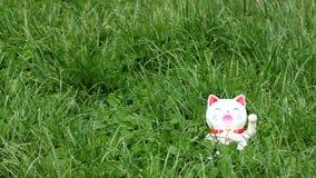 Het welkom heten kat stock video