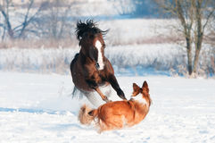 Het Welse poney en hond spelen in de winter Royalty-vrije Stock Fotografie