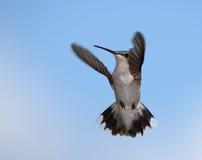 Het wenken Vleugels royalty-vrije stock fotografie