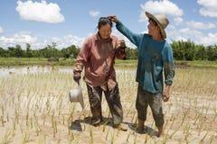 Het werk aangaande het padiegebied, Azië Stock Foto