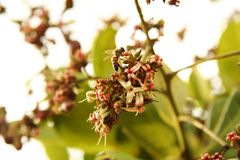 Het bestuiven van de bij bloemen stock afbeelding