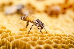 Het werk bij in een bijenbijenkorf stock foto's