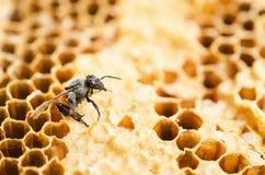 Het werk bij in een honingraat stock fotografie