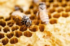 Het werk bij in een honingraat stock afbeeldingen