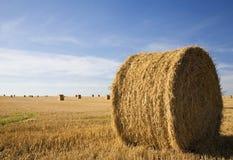 Het werk bij het landbouwbedrijf Stock Foto