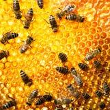 Het werk Bijen   Stock Fotografie