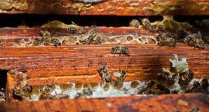 Het werk bijen Stock Afbeelding