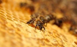 Het werk bijen Stock Foto's