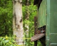 Het werk bijen Stock Foto