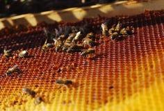 Het werk bijen in honingraten Stock Fotografie