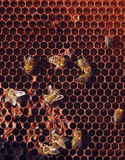 Het werk bijen in honingraten Stock Foto