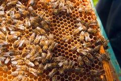 Het werk bijen op de gele honingraat met zoete honing Stock Fotografie