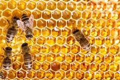 Het werk bijen op zoete honing Stock Foto