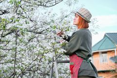 Het werk in de tuin De lentezorg voor bloeiende bomen stock foto