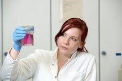 Het werk in laboratorium royalty-vrije stock foto