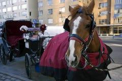 Het werk Paard Stock Fotografie