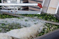 Het werk proces van de productie van komkommers bij de conservenfabriek Het wassen in water vóór behoud Beweging op de transportb stock foto