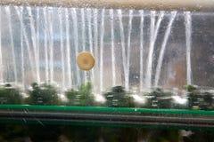 Het werk proces van de productie van komkommers bij de conservenfabriek Het wassen in water vóór behoud Beweging op de transportb stock foto's
