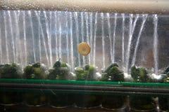 Het werk proces van de productie van komkommers bij de conservenfabriek Het wassen in water vóór behoud Beweging op de transportb royalty-vrije stock afbeelding