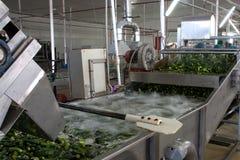 Het werk proces van de productie van komkommers bij de conservenfabriek Het wassen in water v??r behoud Beweging op de transportb royalty-vrije stock afbeelding