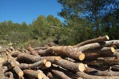 Het werk van de bosbouw stock afbeeldingen