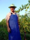 Het werk van de mens in wijngaard stock afbeelding