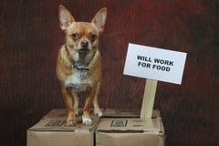Het werk voor voedsel Stock Foto's