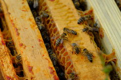 Het werkbijen in bijenkorf Stock Afbeelding