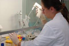 Het werken in laboratorium Stock Foto