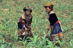 Het Werken van Hmong van de bloem stock foto's