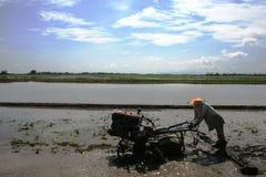 Het werkende padieveld van de landbouwer stock fotografie