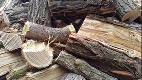 Het werpen van brandhout op een stapel Stapel met brandhout stock videobeelden