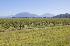 Het westelijke Landbouwlandschap van Canada Royalty-vrije Stock Fotografie