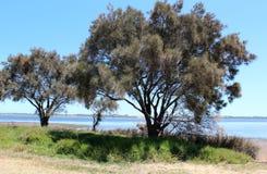 Het Westen Aust van Bunbury van het Estuarium van Leschenault Stock Fotografie