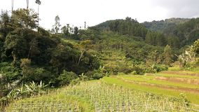 Het westen Java Landscape 9 Stock Afbeelding
