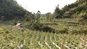Het westen Java Landscape 13 Stock Foto