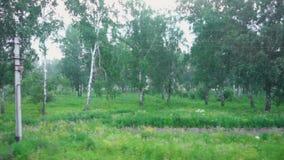 Het westen Siberisch landschap door het treinvenster stock footage