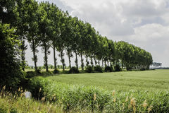 Het westen Zeeuws Vlaanderen, Nederland Royalty-vrije Stock Fotografie