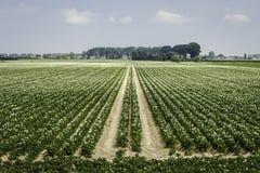 Het westen Zeeuws Vlaanderen, Nederland Stock Afbeelding
