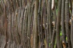 Het weven van wilgentakken Omheining van boomtakken stock afbeeldingen