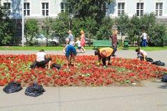 Het wieden van bloembedden in het stadscentrum van de stad Stock Afbeelding