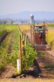 Het wieden van Washington Berry Farm stock foto