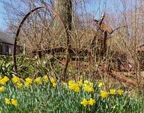 Het Wiel van de gele narcis Stock Afbeelding