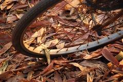 Het wiel van fiets Stock Afbeeldingen